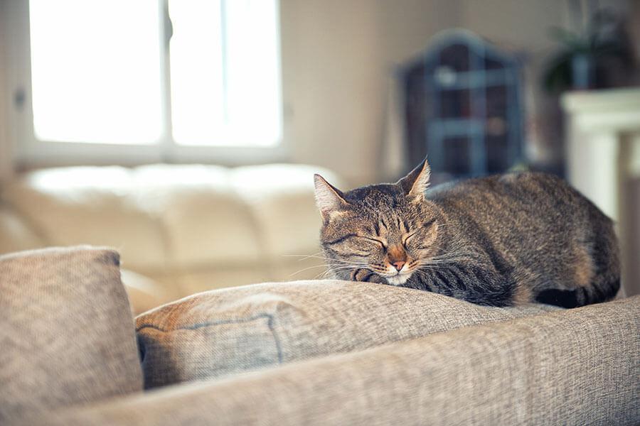 gatinho dorme em cima do sofá